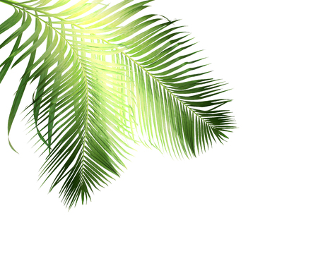 green palm leaves on white background Stock Photo