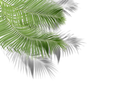 green palm leaves with shadow on white background