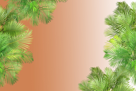 top view palm leaves tree for summer background Banco de Imagens - 122695382