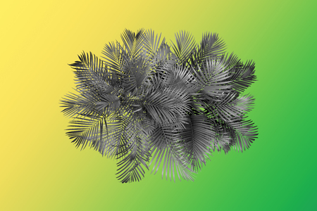 top view palm leaves tree for summer background