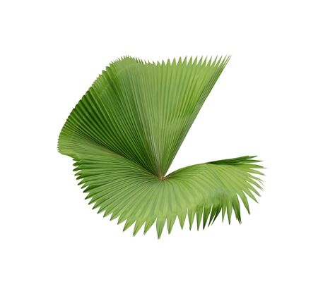 tropical nature green palm frond leaf pattern