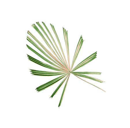 tropical nature green palm leaf pattern,chinese windmill
