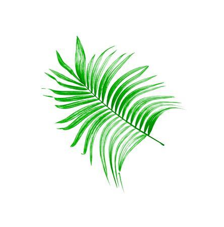 green leaf of palm tree on white background Фото со стока