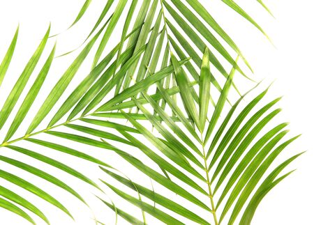 tropical nature green palm leaves isolated on white pattern background Stockfoto