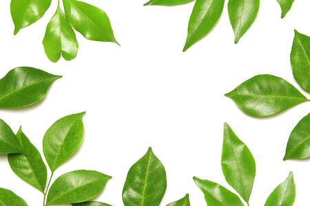 collection tropical green leaf on white background Archivio Fotografico