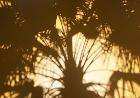 tropical nature shadow palm leaf on golden wall background