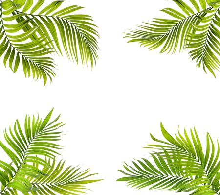 green palm leaf on white for summer background