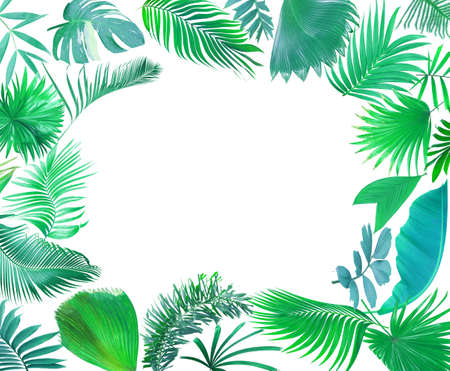 tropical green palm leaf on white for summer background
