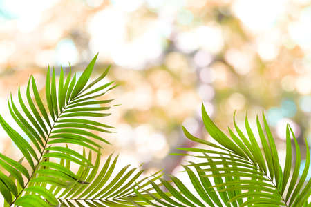 green palm leaf and bokeh abstract light background