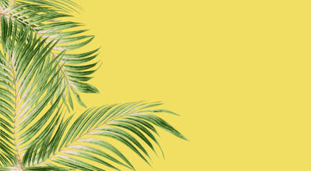 Green leaf of palm tree for background