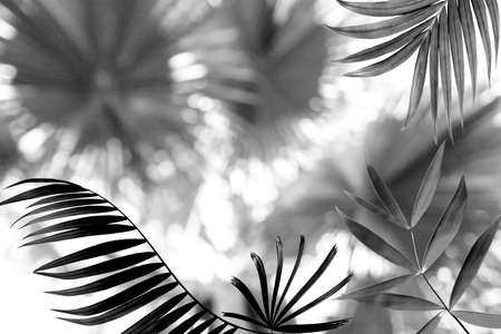 black palm leaf and flower bokeh abstract light for summer background Stock Photo