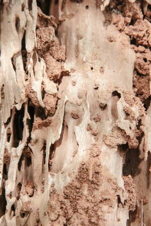 A Texture of Moldering wood