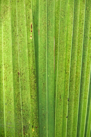 the line of coconut tree leaf