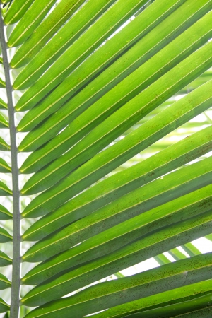 the line of coconut tree leaf photo