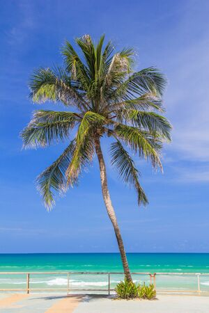 Coconut trees on the walk way in front of beautiful beach of Koh phuket Thailand photo