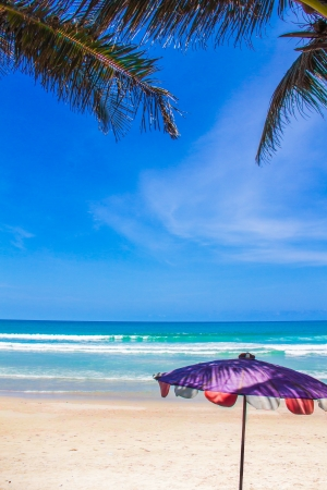 Purple  Beach umbrella under coconut palm tree photo