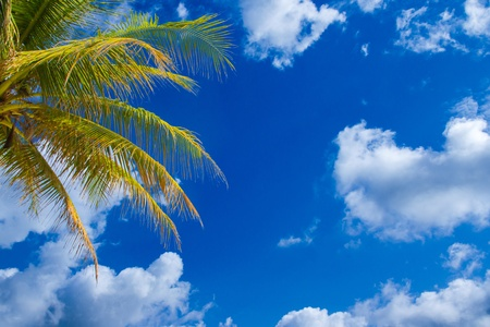 coconut leaf ,cloud and blue sky