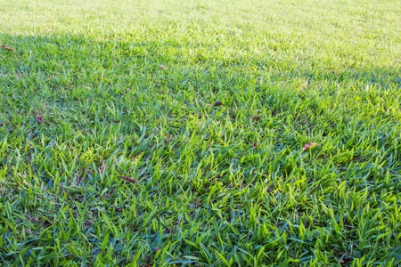 Green grass background or texture Stock Photo - 17469171