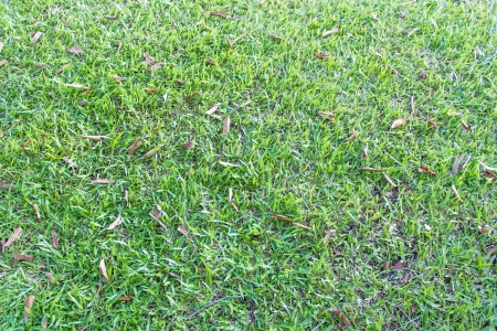 Green grass background or texture Stock Photo - 17469173