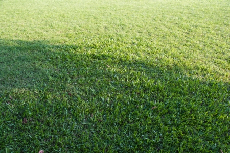 Green grass background or texture Stock Photo - 17469164