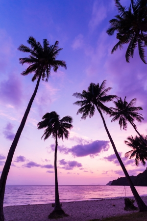 Silhouetted of coconut tree during sunrise