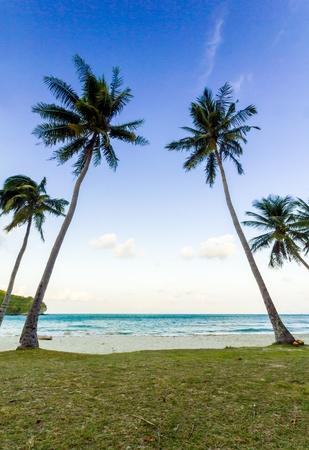 Coconut Trees on a beach of Angthong Marine National Park, Thailand photo