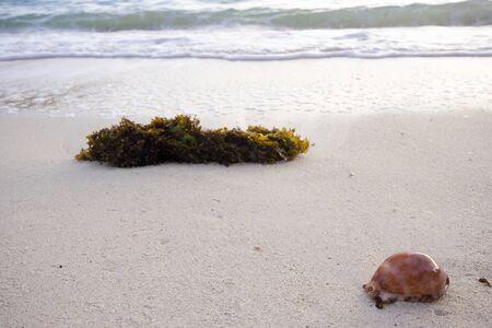 Tote Algen und Muscheln am Sandstrand