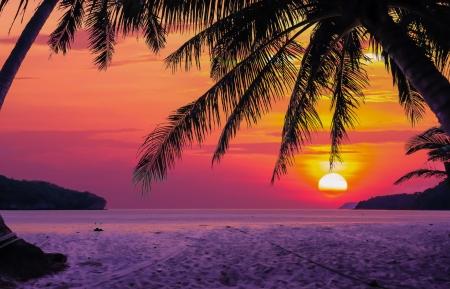 日の出の間にココヤシの木のシルエット 写真素材