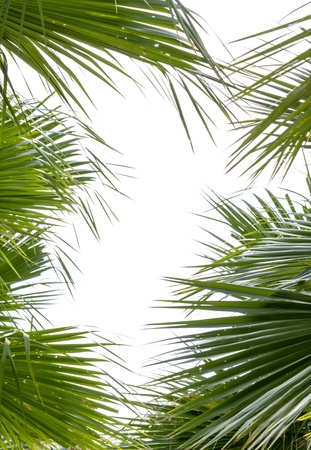 Leaves of palm tree Frame isolated on white background Stock Photo