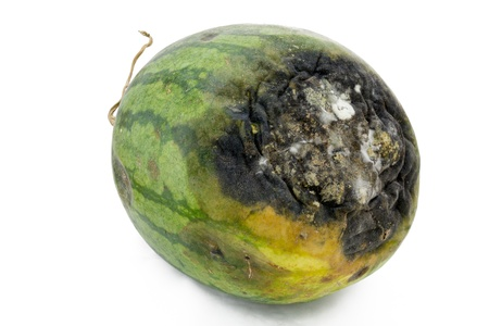 Rotten watermelon isolated on a white background
