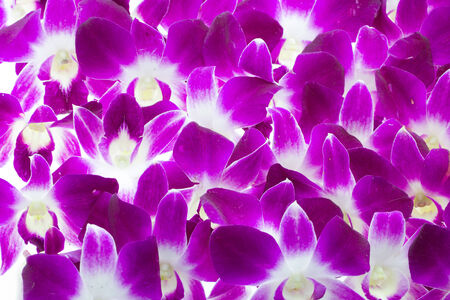 Purple Orchids use for background and texture photo