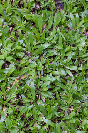 Green grass surface background photo