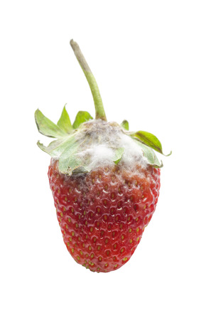 strawberry mold over white background