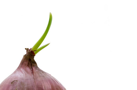 aftertaste: Red onion with green sprout isolated on white