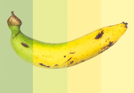 bad banana: mixed picture of The cycle life of banana in one week. Stock Photo