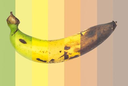 The cycle life of banana photo