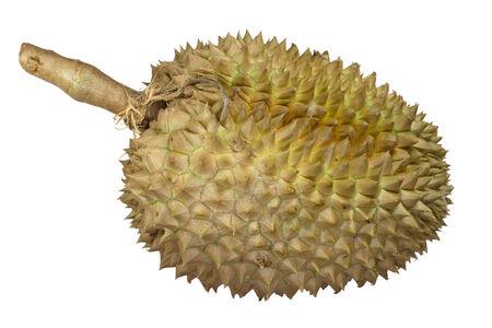 Durian fruit isolated on white background photo
