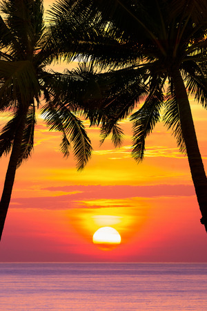 tropical tree: Beautiful beach sunset over the sea with coconut tree