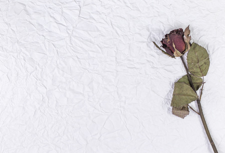 Dead rose over crumpled paper background Contept of lost love,divorce, or a bad relationship