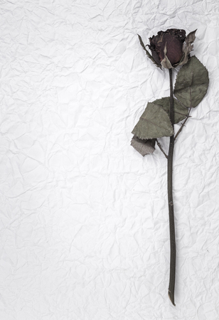 dry rose flower over crumpled paper background photo
