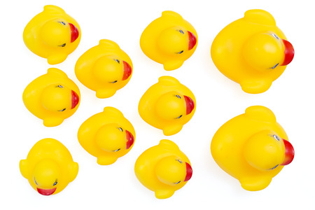 ugly duckling: Rubber ducklings followed their parents, An individualist is sticking out the crowd