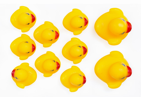 individualist: Yellow rubber ducks in a row. An individualist is sticking out the crowd Stock Photo