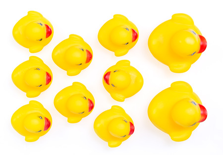ugly duckling: Rubber ducklings followed their parents