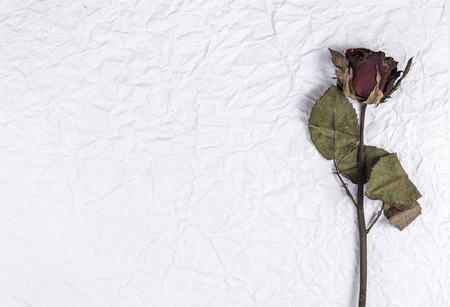 A dried rose flower on crumpled paper background photo