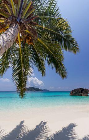 similan: Paradise beach of Similan islands with coconut plam tree, Thailand