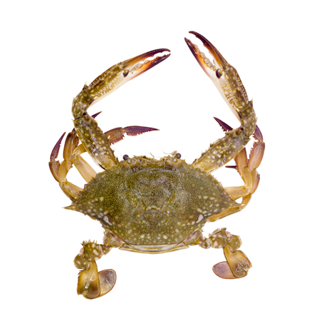 blue crab: Blue crab isolated on white background