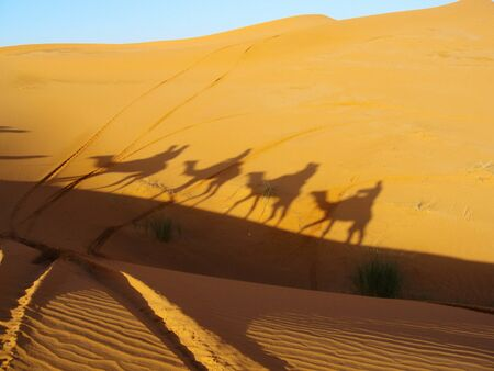 Camel shadow in dune of sand in desert Banque d'images