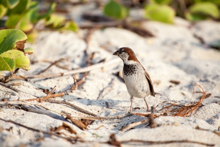 Small bird on sand in Hawaii