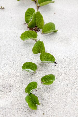 A plant grows through sandy beach