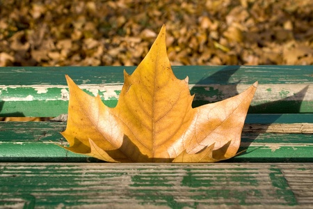 Maple tree leaf on a green bench on an autumn sunny day photo